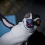 Emergency Story Penguin