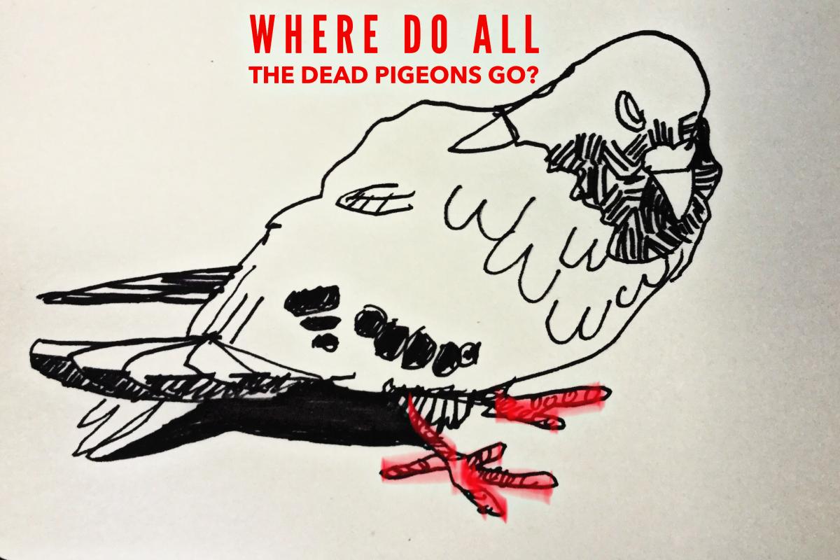 WHERE DO ALL THE DEAD PIGEONS GO - Scott Turnbull